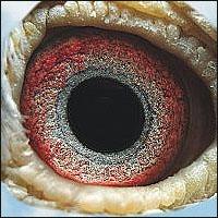 [تصویر:  eye11.jpg]