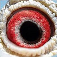 [تصویر:  eye29.jpg]
